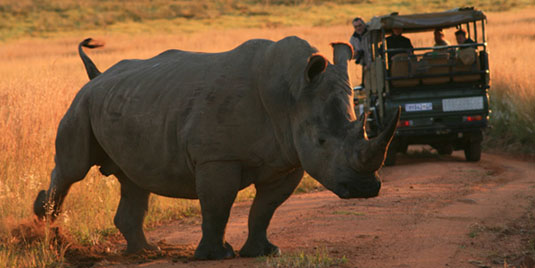 Rhino sighting Kololo Game Reserve malaria-free Waterberg Welgevonden Game Reserve Big 5 Self catering or Fully Catered South Africa