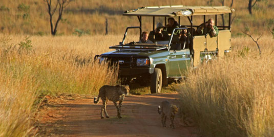 Cheetha mother cubs Kololo Game Reserve malaria-free Waterberg Welgevonden Game Reserve Big 5 Self catering or Fully Catered South Africa